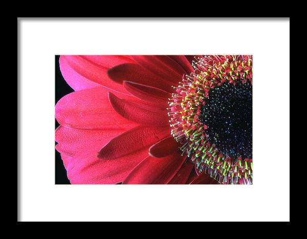 Red Framed Print featuring the photograph Red Sun by Gina Cormier