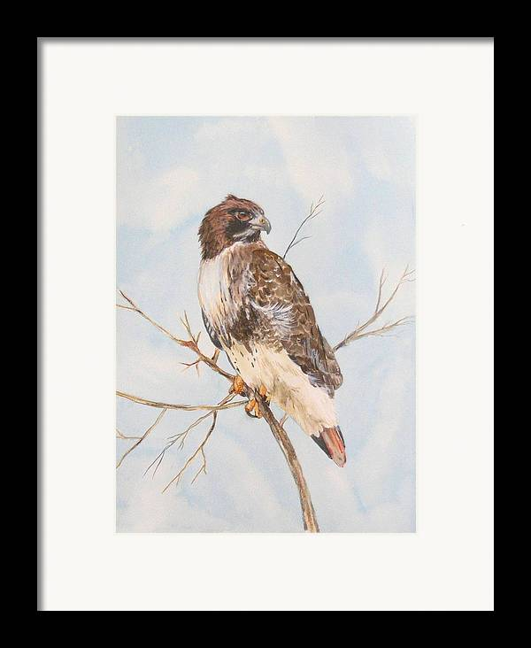 Framed Print featuring the painting Red Tail Hawk by Diane Ziemski