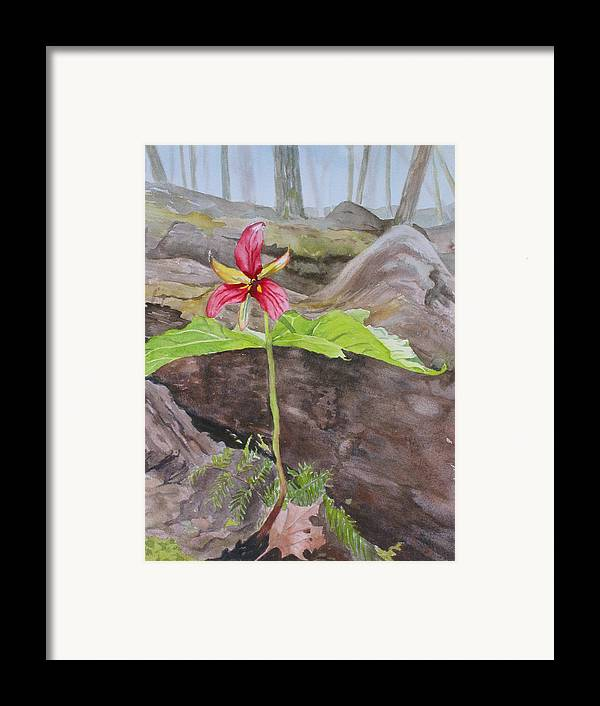 Red Trillium Framed Print featuring the painting Red Trillium In The Spring by Debbie Homewood