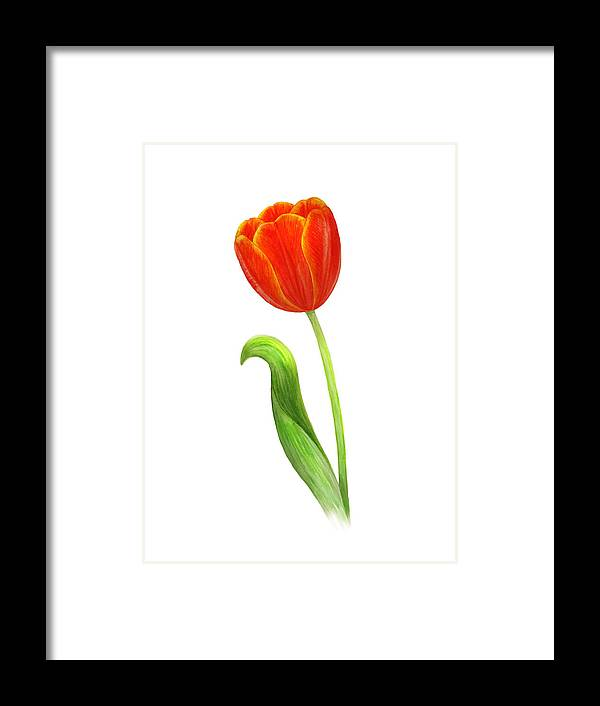 Painting Framed Print featuring the painting Red Tulip by Julia Gogol