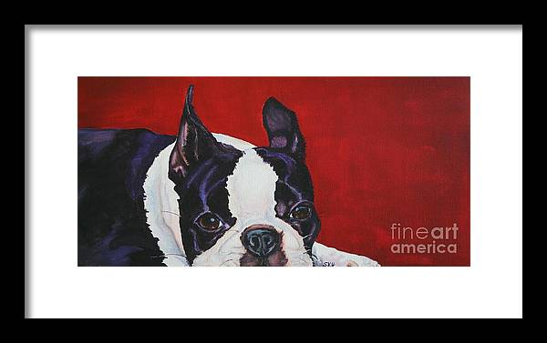 Boston Terrier Framed Print featuring the painting Red White And Black by Susan Herber
