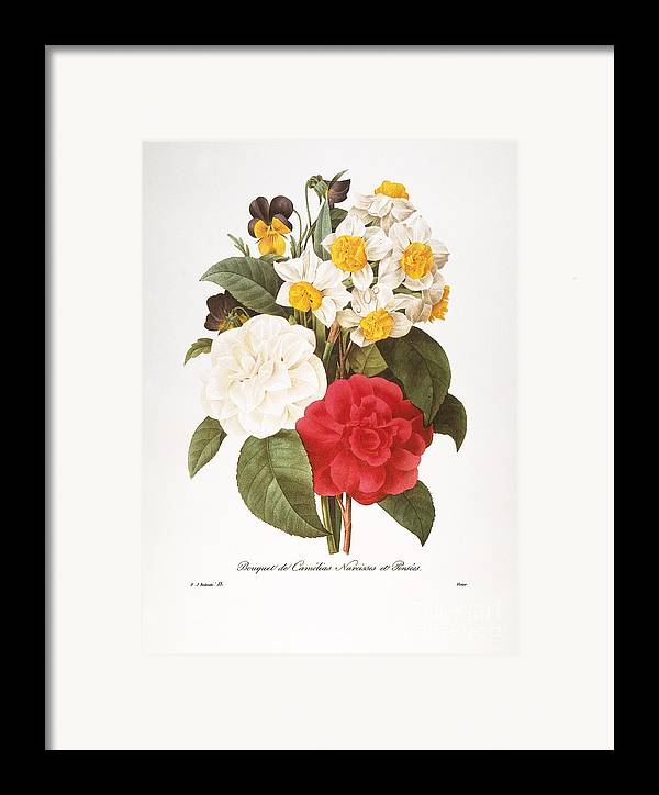 1833 Framed Print featuring the photograph Redoute: Bouquet, 1833 by Granger