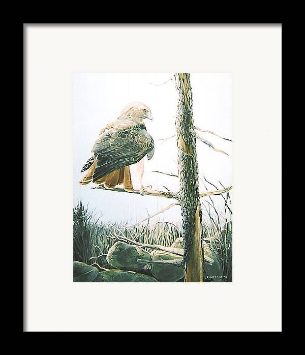 Wildlife Framed Print featuring the painting Redtail Hawk by Steve Greco