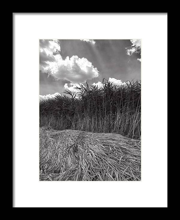 Fine Art Framed Print featuring the photograph Reeds And Clouds by Robert Ullmann