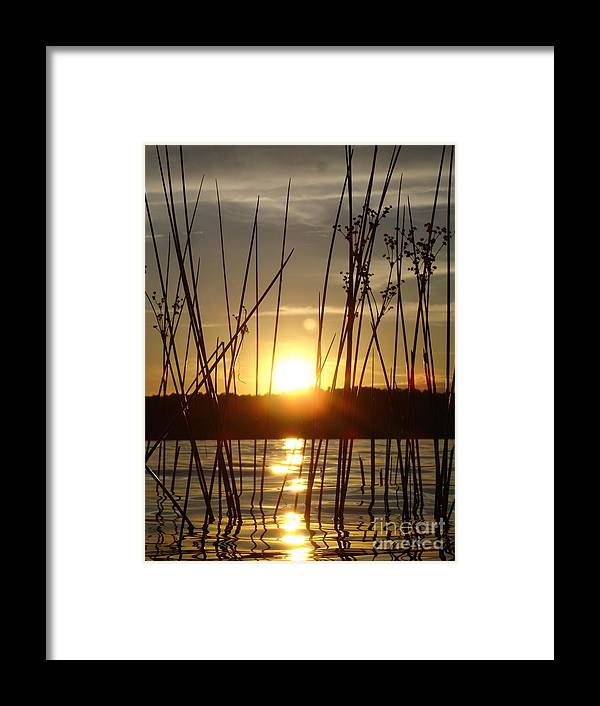 Landscape Framed Print featuring the photograph Reeds In A Lake by Chad Natti