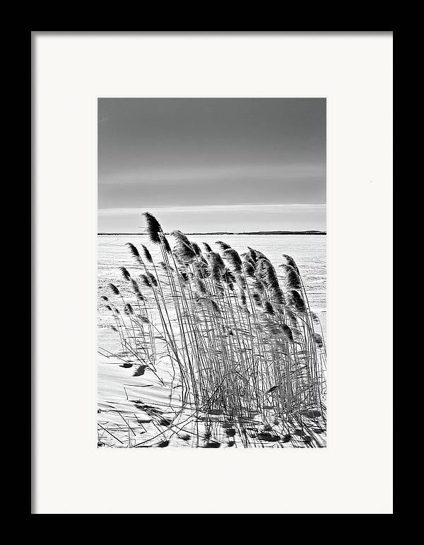 Black And White Framed Print featuring the photograph Reeds On A Frozen Lake by Peter Pauer