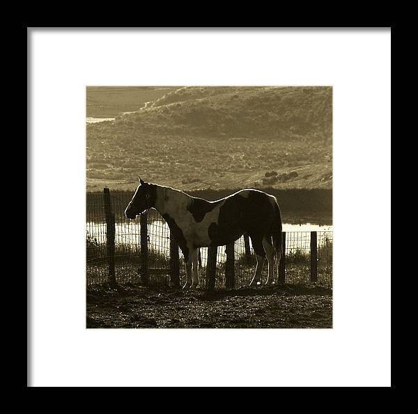 Horse Framed Print featuring the photograph Reflected Light by Donna Thomas