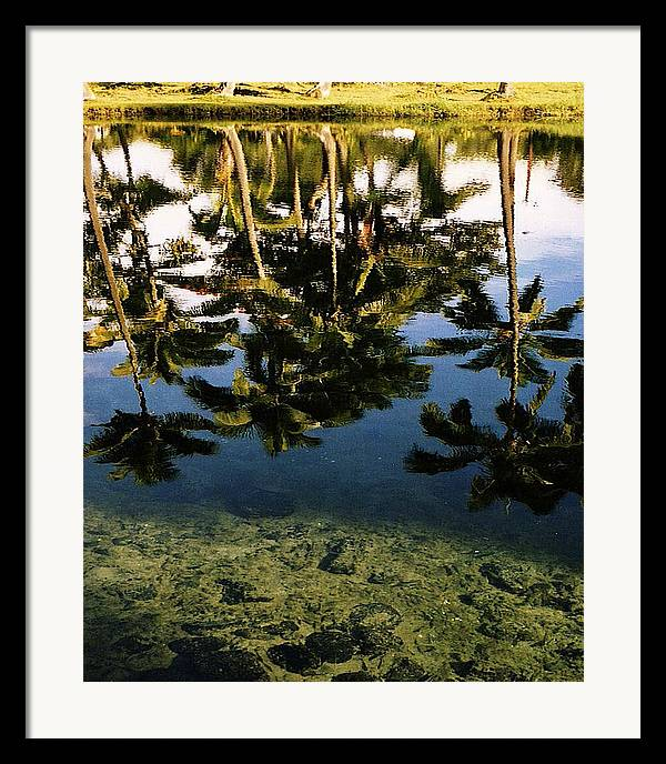 Palms Framed Print featuring the photograph Reflected Palms by Michael Lewis