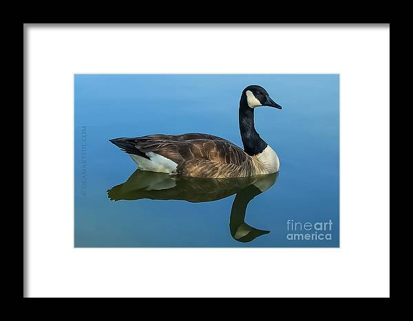 Outdoors Framed Print featuring the photograph Reflecting Grace by Maria Costello