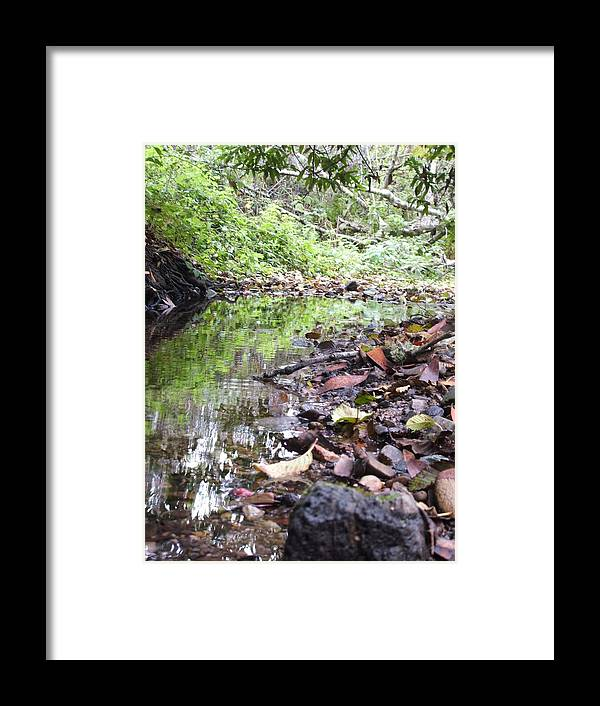 Woods Framed Print featuring the photograph Reflection by Shari Chavira