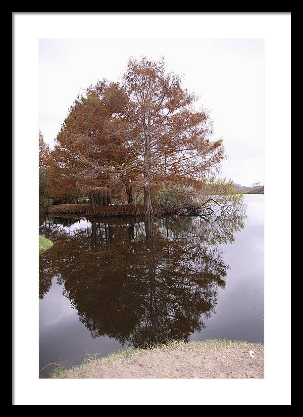 Reflection Framed Print featuring the photograph Reflection by Sindia Lima