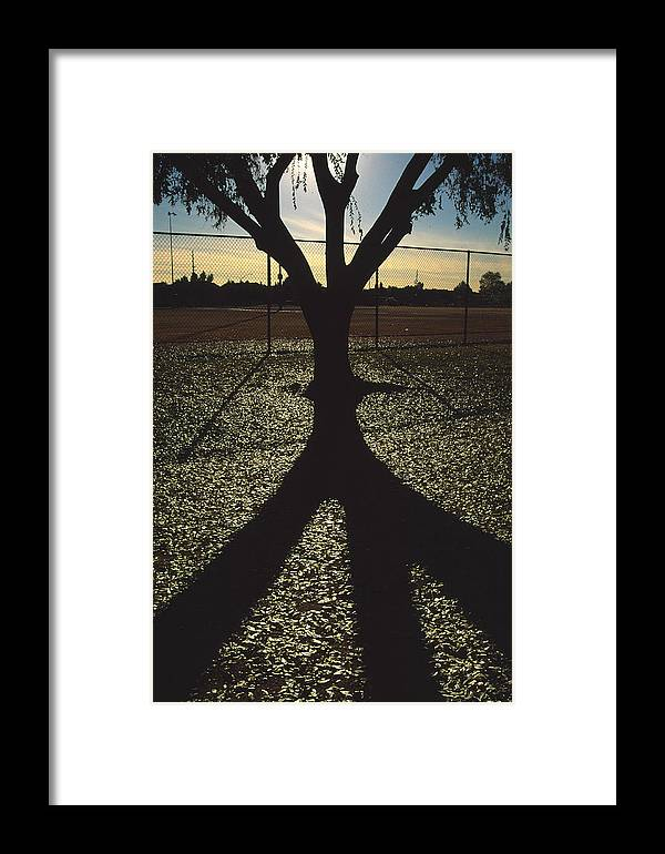 Tree Framed Print featuring the photograph Reflections In A Park by Randy Oberg