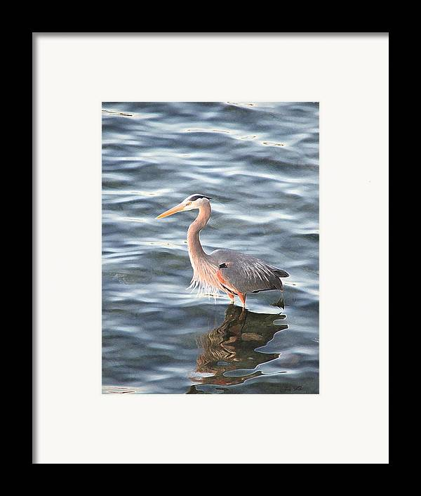 Bird Framed Print featuring the photograph Reflections In The Water by Judy Waller