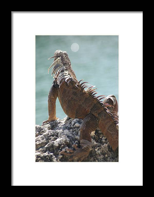 Animals Framed Print featuring the photograph Reflections by Lori Mellen-Pagliaro