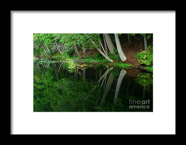 Forest Framed Print featuring the photograph Reflections Of A Forest by Idaho Scenic Images Linda Lantzy