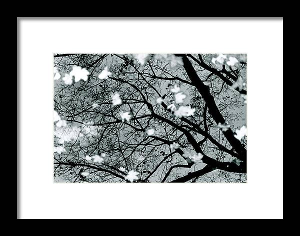 Nature Framed Print featuring the photograph Reflections Of Fall by Chaz McDowell