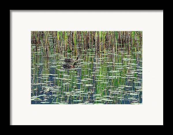 Reflections Framed Print featuring the photograph Reflections On Duck Pond by Sharon Talson