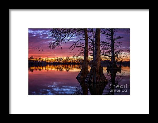 Horseshoe Lake Framed Print featuring the photograph Refuge by Anthony Heflin