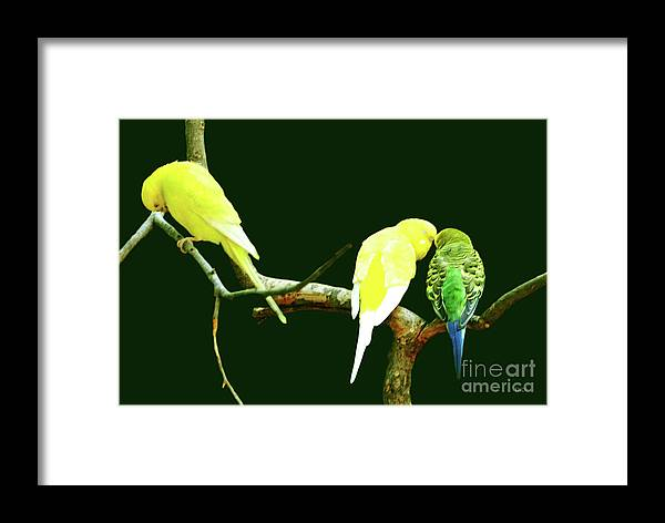 love Birds Framed Print featuring the photograph Rejection by DiDi Higginbotham