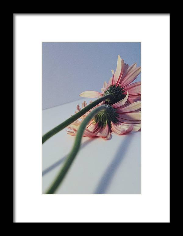 Flower Framed Print featuring the photograph Relapse by Jessica Girardin