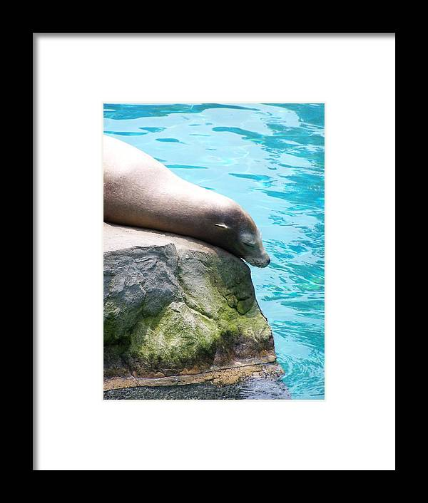 Sea Lion Framed Print featuring the photograph Relax by Adam Schwartz