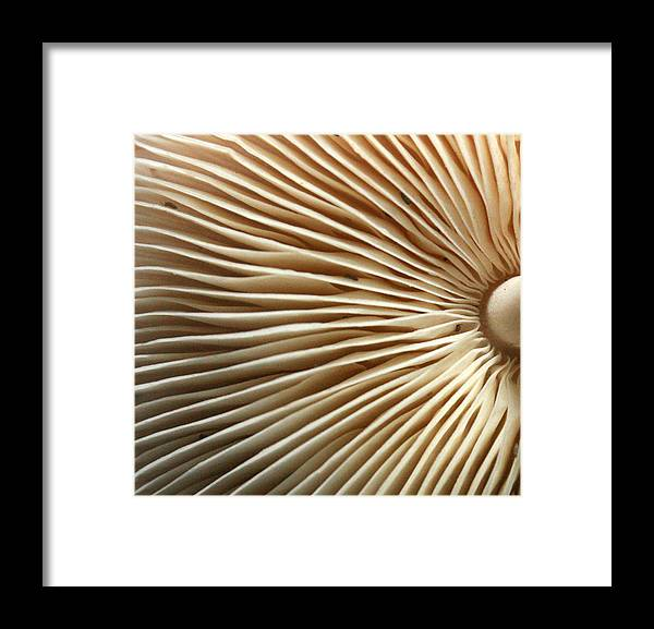 Mushrooms Framed Print featuring the photograph Repetishroomin by Jennifer Bright
