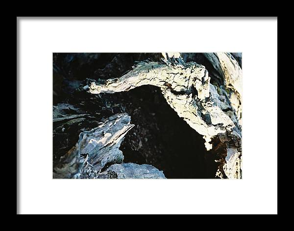 Rotting Framed Print featuring the photograph Reptilian Morphious by Jennifer Trone