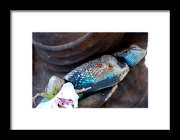 Stil Life Framed Print featuring the photograph Requiem For A Rainbow Lizard by Heather S Huston