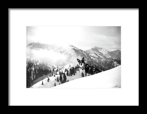 Black And White Framed Print featuring the photograph Rescue Dog by Billy Soden