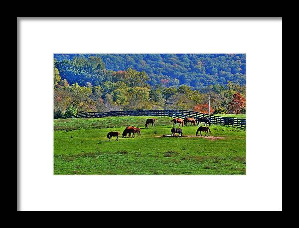 Horses Framed Print featuring the photograph Rescue Horses by Eileen Brymer