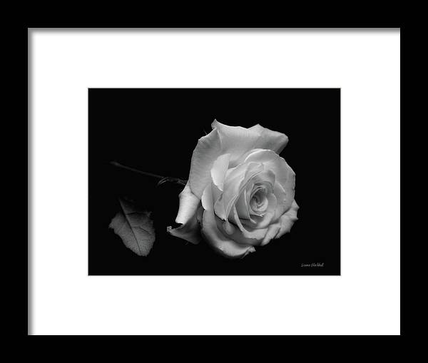 Rose Framed Print featuring the photograph Rest In Peace by Donna Blackhall