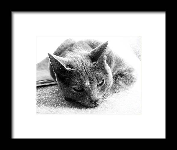 Cats Framed Print featuring the photograph Resting by Amanda Barcon