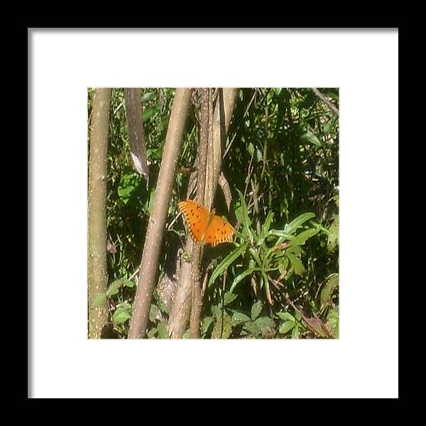 Butterfly Framed Print featuring the photograph Resting by Carla Fionnagain