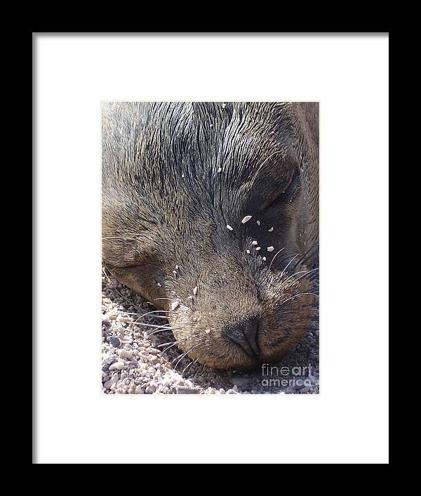 Animal Framed Print featuring the photograph Resting Lion by Chad Natti