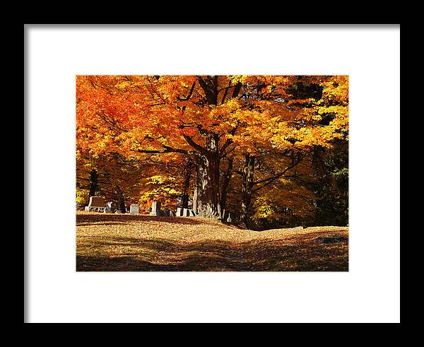Resting Under Maples Framed Print featuring the photograph Resting Under Maples by Rachel Cohen