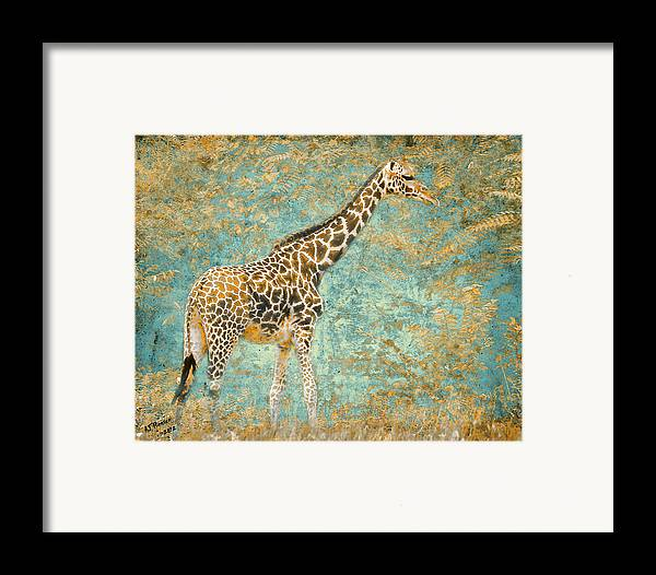 Pittsburgh Zoo Framed Print featuring the photograph Reticulated by Arne Hansen