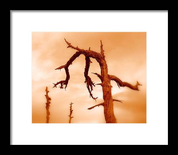 Tree Framed Print featuring the photograph Retired by Miron Abramovici