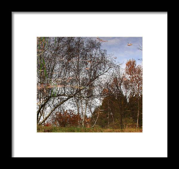 Nature Framed Print featuring the photograph Rheinstrom Trees With A Twist by Larry Federman