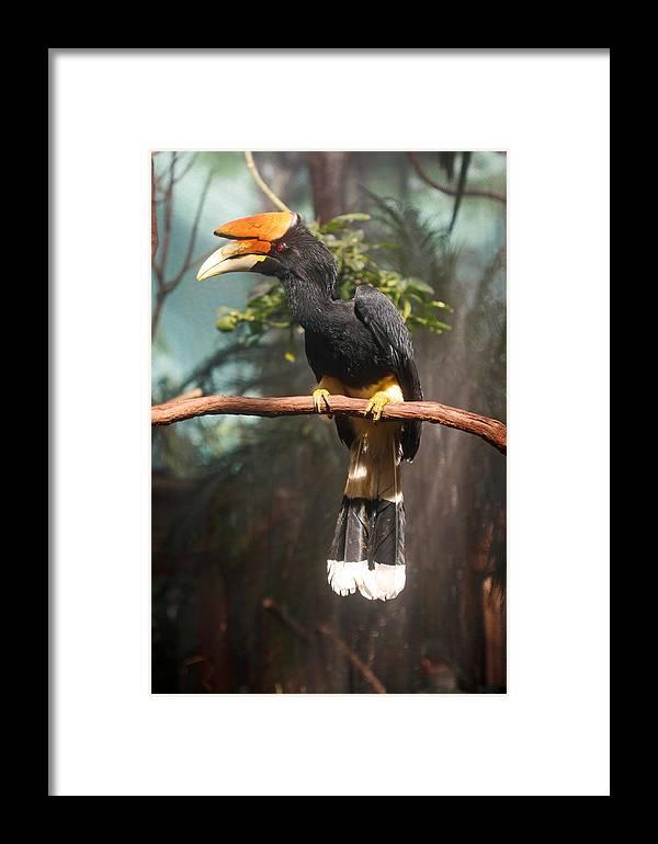 Bird Framed Print featuring the photograph Rhino Horn Bill by Paul Slebodnick