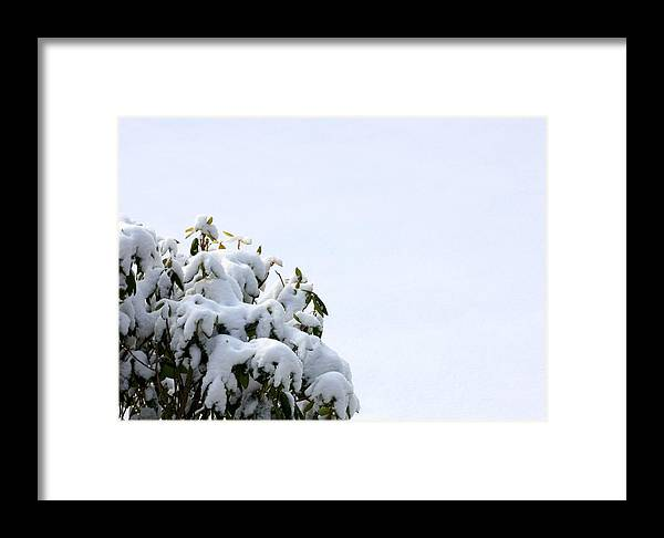 Fresh Framed Print featuring the photograph Rhode To Snow by Annie Babineau