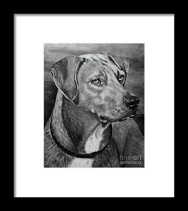 Dog Framed Print featuring the drawing Rhodesian Ridgeback by Terri Mills