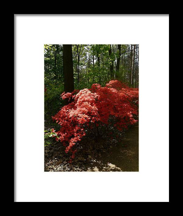 Nature Framed Print featuring the photograph Rhododendron by Attila Balazs