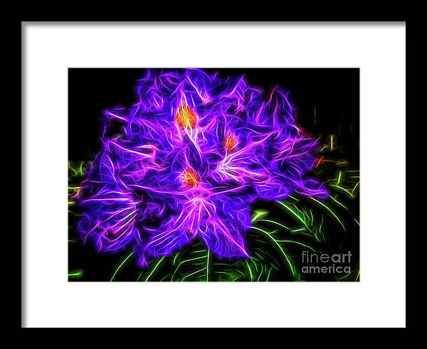 Rhododendron Framed Print featuring the photograph Rhododendron Topaz by MarianaEwa Asklof