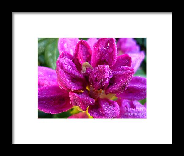 Rhododendrum Framed Print featuring the photograph Rhododendrum by Jeff Breiman