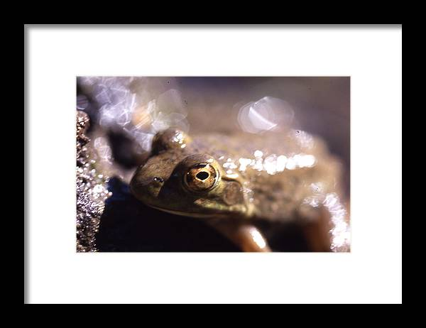 Framed Print featuring the photograph Ribbit by Curtis J Neeley Jr