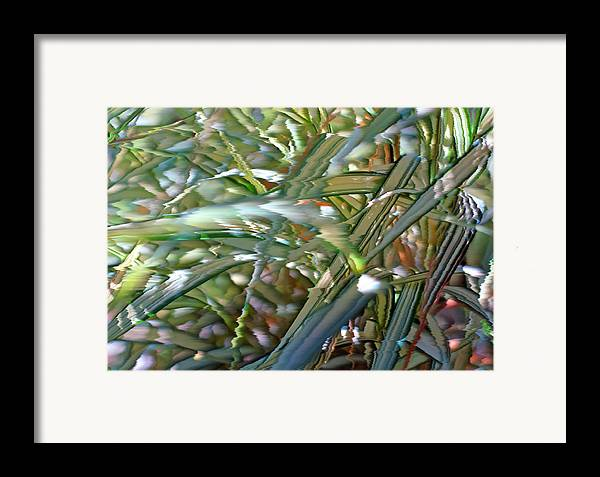 Grass Framed Print featuring the photograph Ribbon Grass 3 by Steve Ohlsen