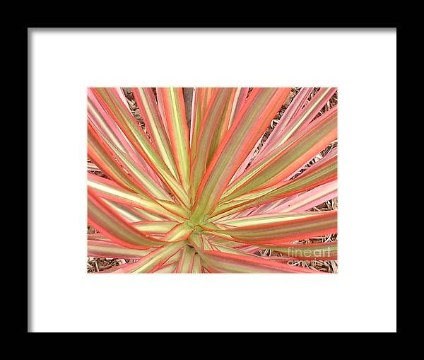 Red Palm Framed Print featuring the photograph Ribbon Palm by Chandelle Hazen