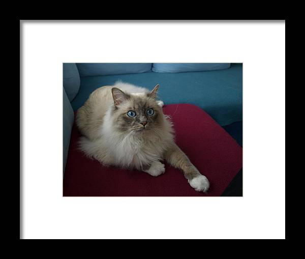 Cat Framed Print featuring the photograph Right Now by Chuck Shafer