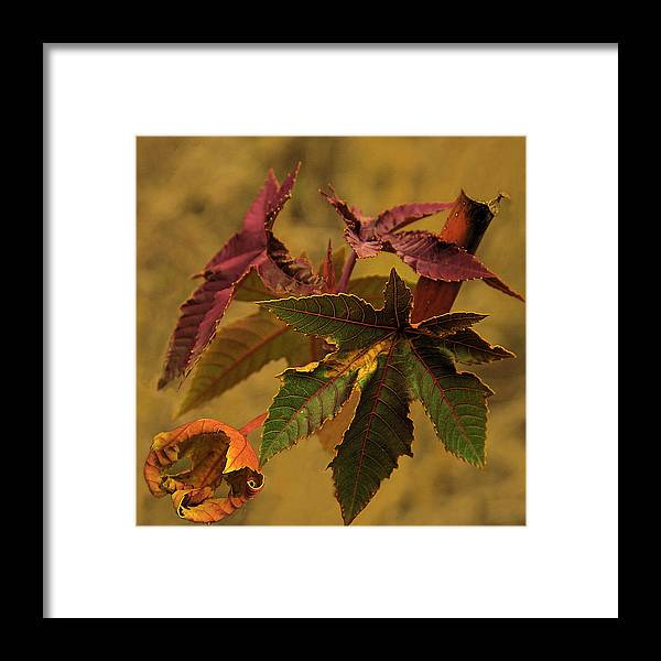 Nature Framed Print featuring the photograph Ring by Viktor Savchenko