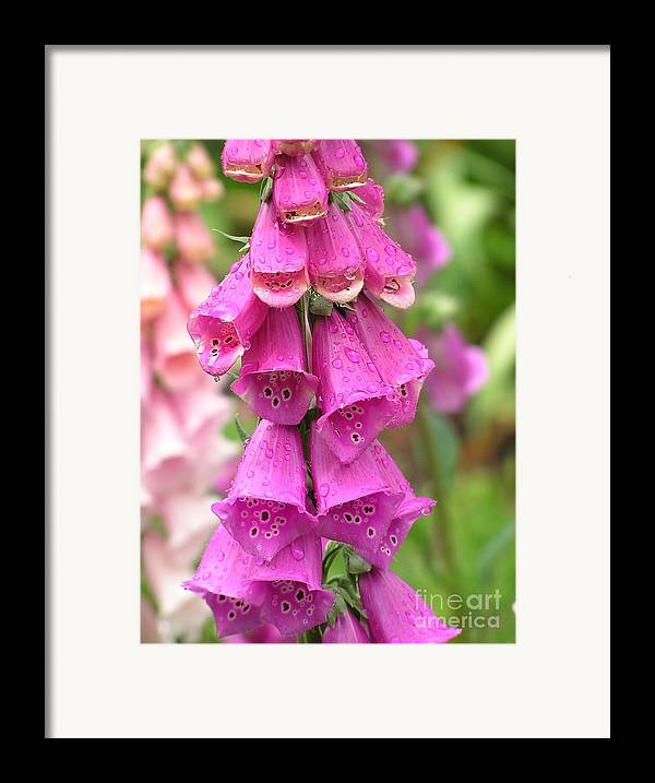 Fox Glove Framed Print featuring the photograph Ringing Bells by Louise Magno